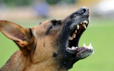 When dogs attack people – a veterinarian's perspective