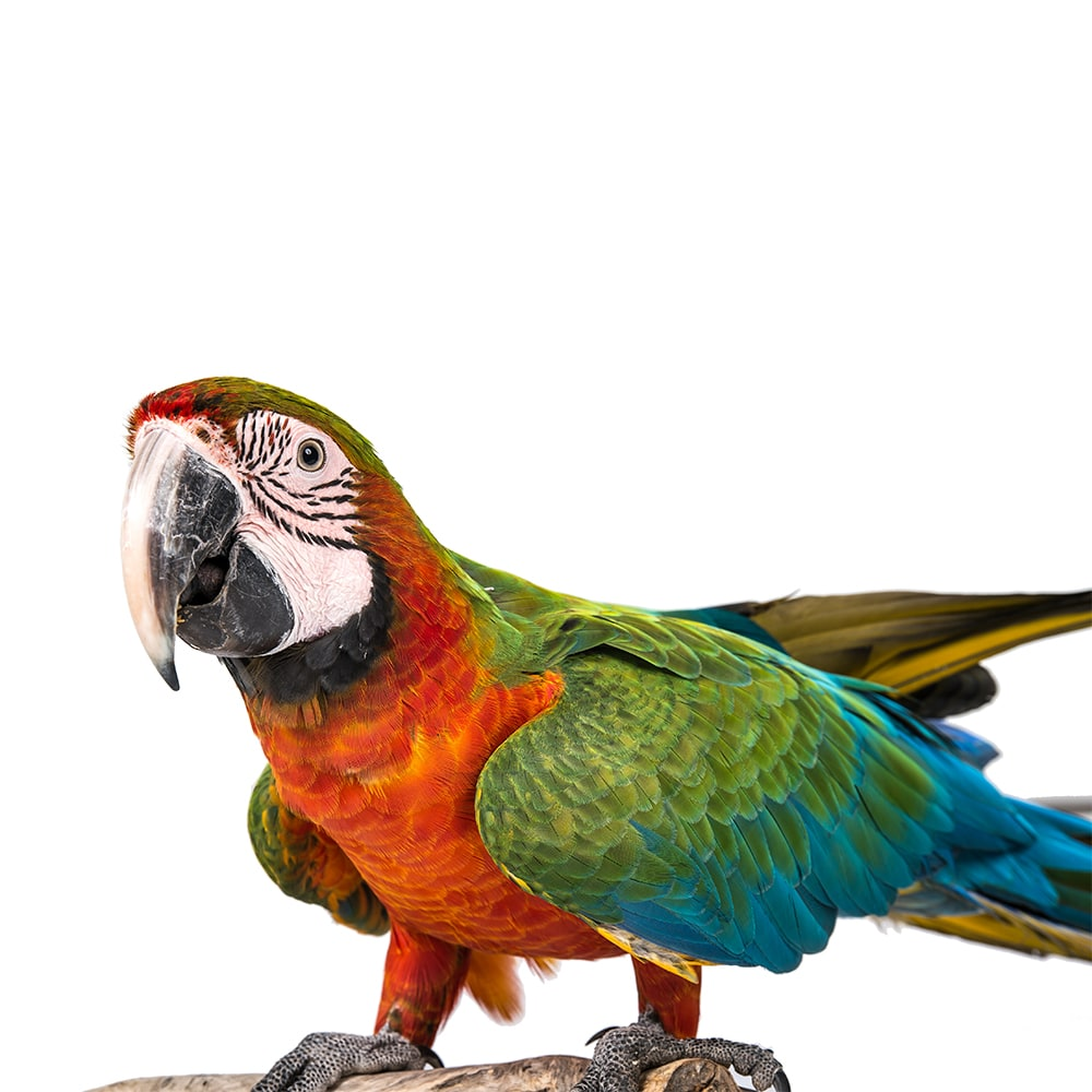 birds_flipped-min