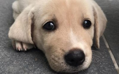 Puppy Problems? Don't Scold it – School it!