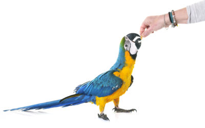 How to Find the Right Nutritional Mix for Domesticated Exotic Birds – Is it All Nuts?