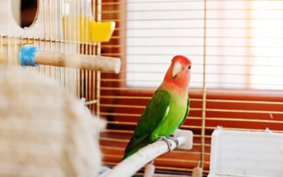 Heavy Metal Poisoning From Aviaries and Bird Cages