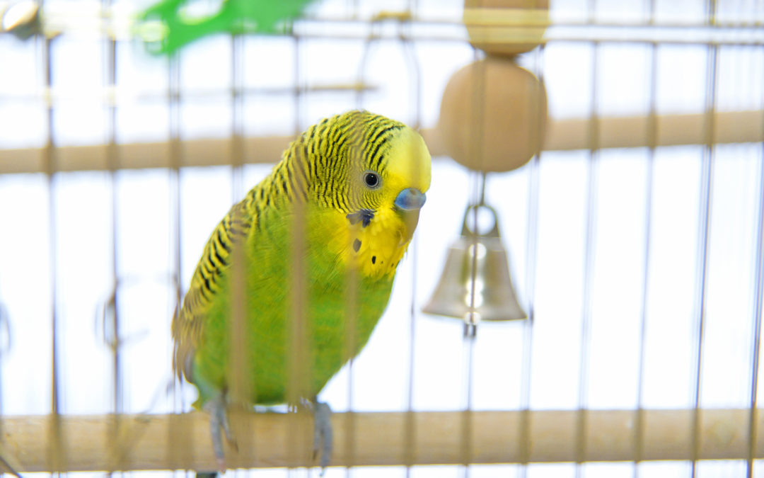 When Your Exotic Bird Isn't Talking to You – It's Telling You Something