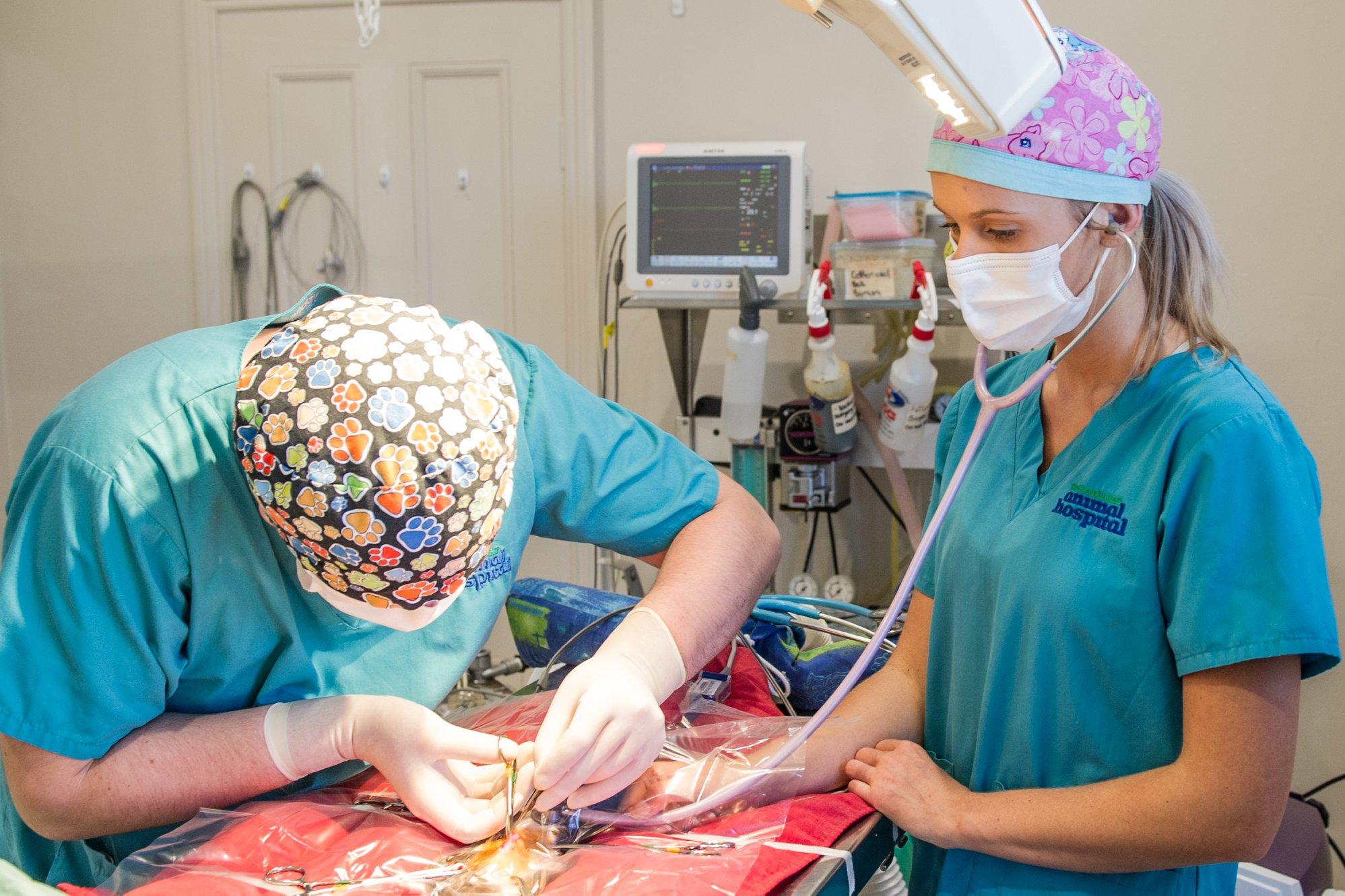 Sugarloaf-Animal-Hospital-Contact